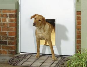 входная дверь для животных