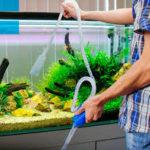 Что входит в работу специалиста по обслуживанию аквариума?