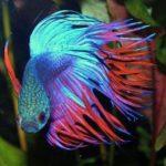 Как правильно заботится о комнатных рыбках
