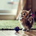 Правильно ухаживаем за котятами